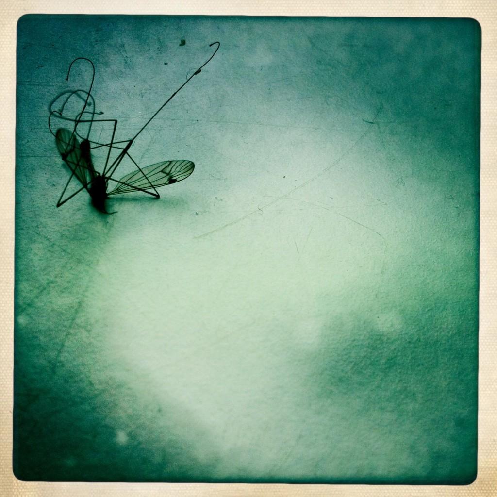 Die tote Mücke am Fensterbrett