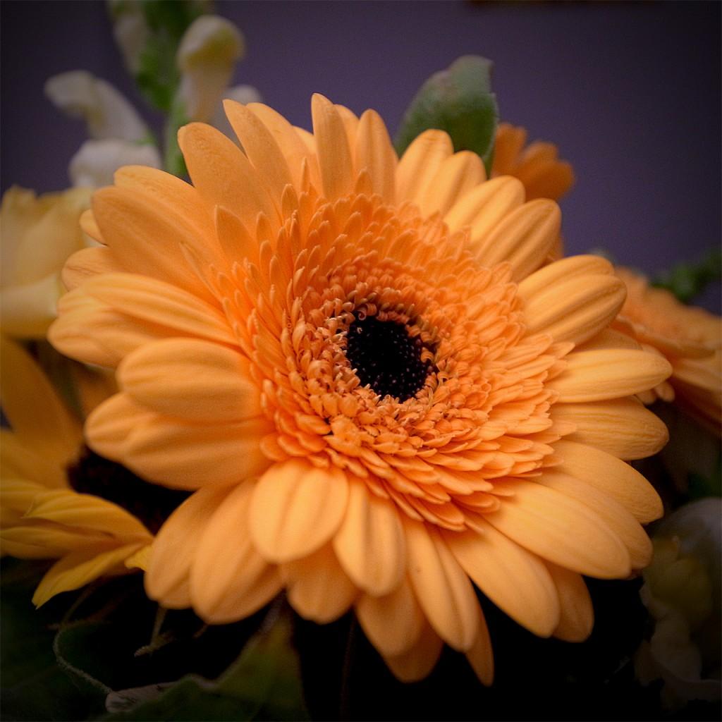 Frl. S. Blumen